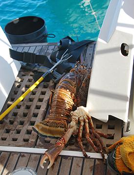 01-langouste et crabe