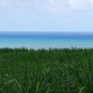 Ride de char en Martinique avec Danielle