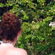 Elle parle aux iguanes
