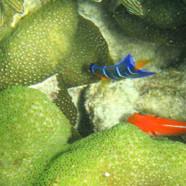 Living reef p.2